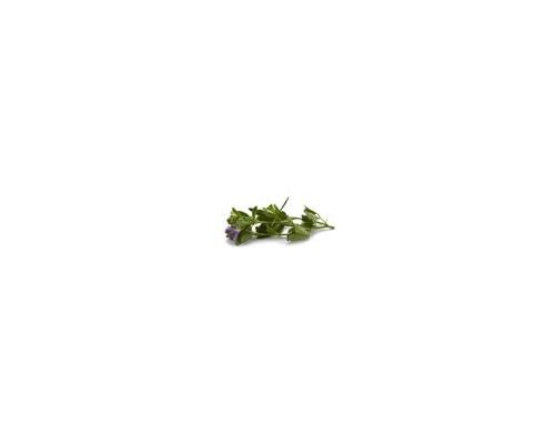 Alfalfa Flower & Leaf – Ανθός και φύλλα αλφάλφα