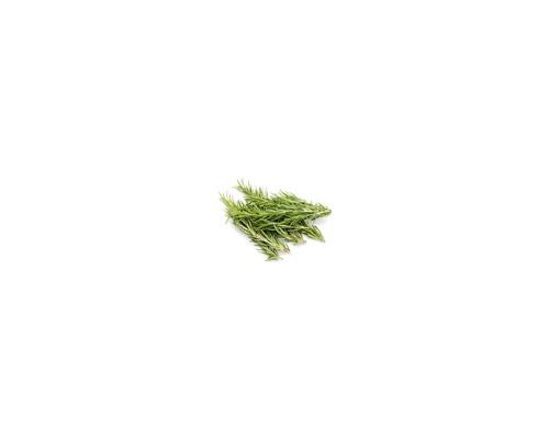 Rosemary Leaf - Φύλλα δεντρολίβανου