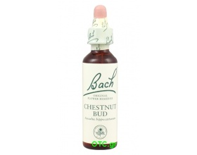 CHESTNUT BUD Bach Flower Remedies