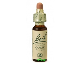 GORSE Bach Flower Remedies